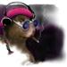 The Marvin Hamster Music Emporium