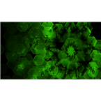 AMS-Cluster