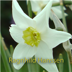 Ragnhild Hanssen